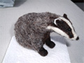 needle-felted badger by Olwen Veevers