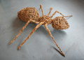 Ant made from willow by Catherine Pudner